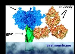 HIV-1 cartoon